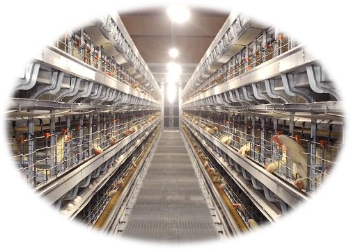 HACCP農場