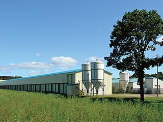 Hayakita Farm(pullets farm)