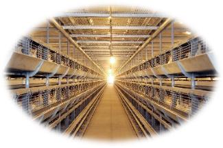 HACCP Certified Farms